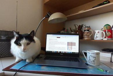 SV_cat
